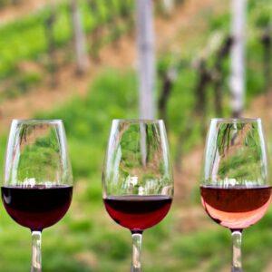 Wijnglazen in wijngaard